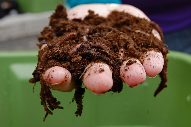 Compost with worms