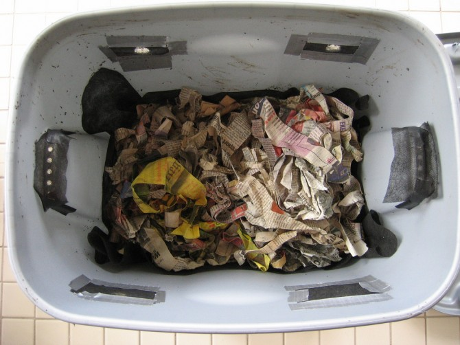 Compost bin with newspaper