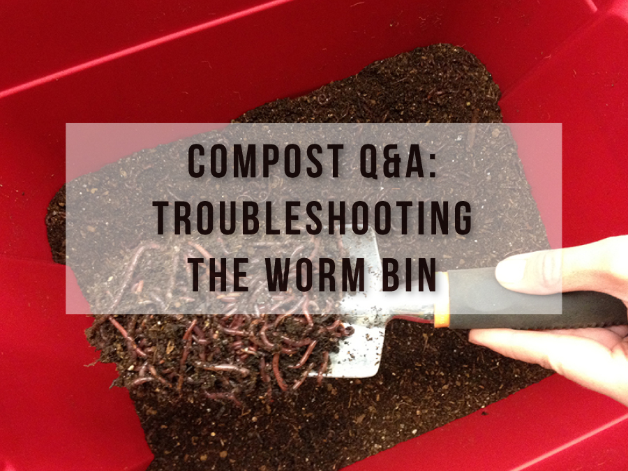 Compost Q&A: Troubleshooting the Worm Bin