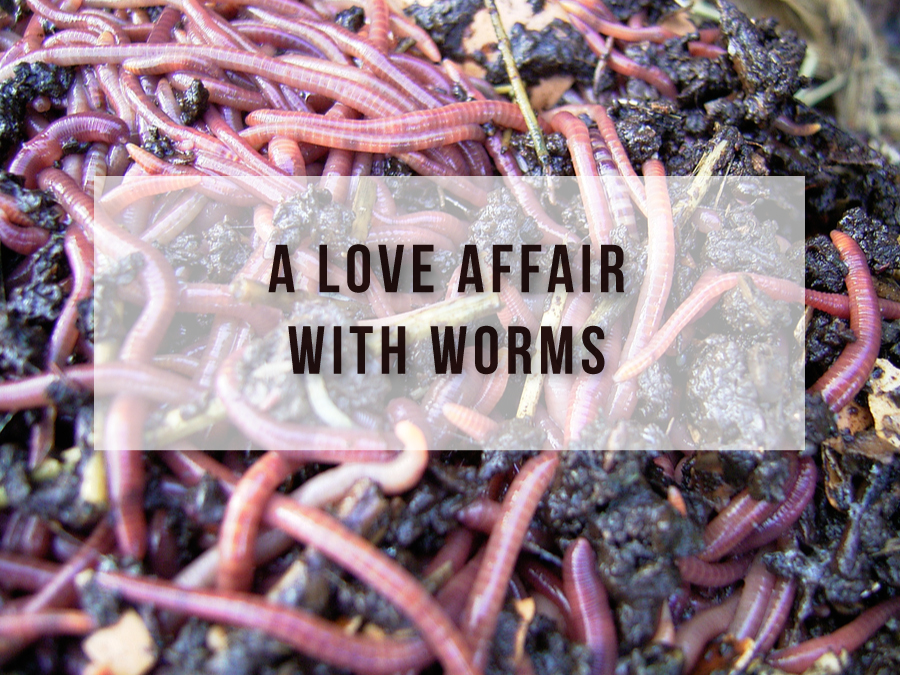 A Love Affair With Worms