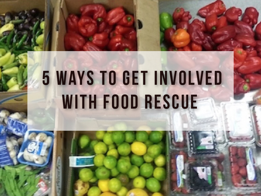 5 Ways to Get Involved With Food Rescue